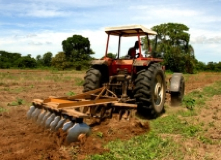 Agricultura / Avicola